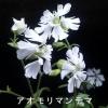 花一匁 K.Hanada