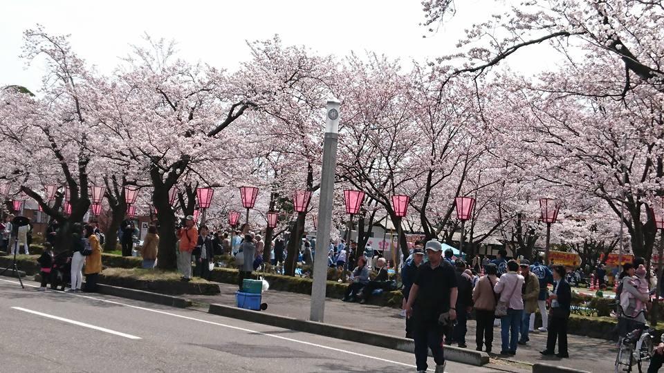 【百万人観桜会神輿】-3