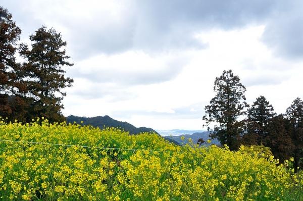 3黄色い丘190304