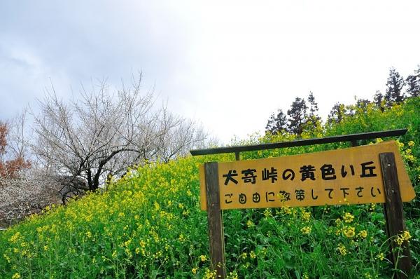 2黄色い丘190304