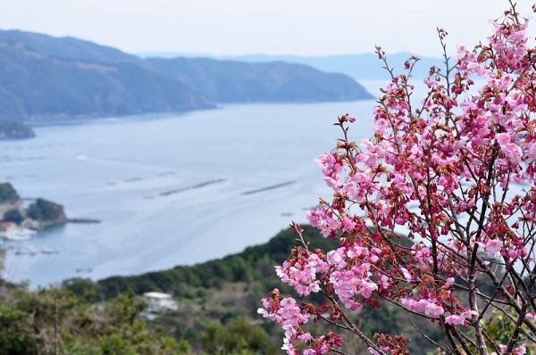 1陽光桜190318