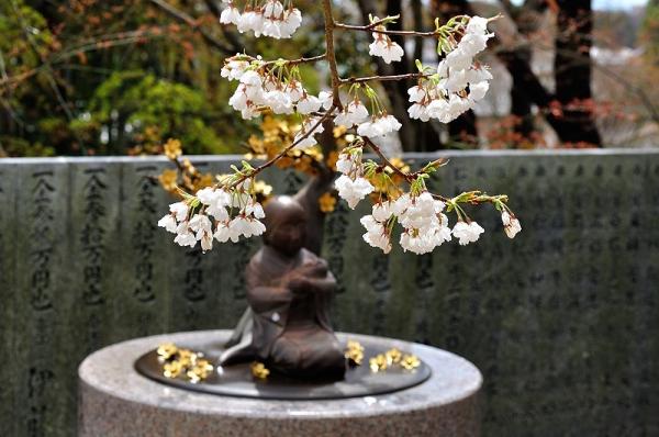 5うば桜190319