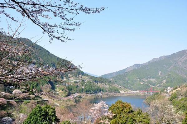 8大渡ダム湖畔190327